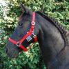 Basis Halster voor paarden