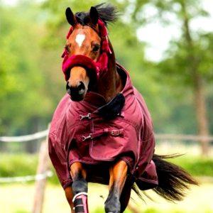 Winterdeken paard 200 gram