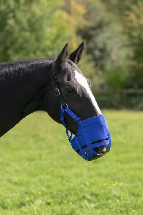Anti-graas The Ultimate Muzzle Pony 1