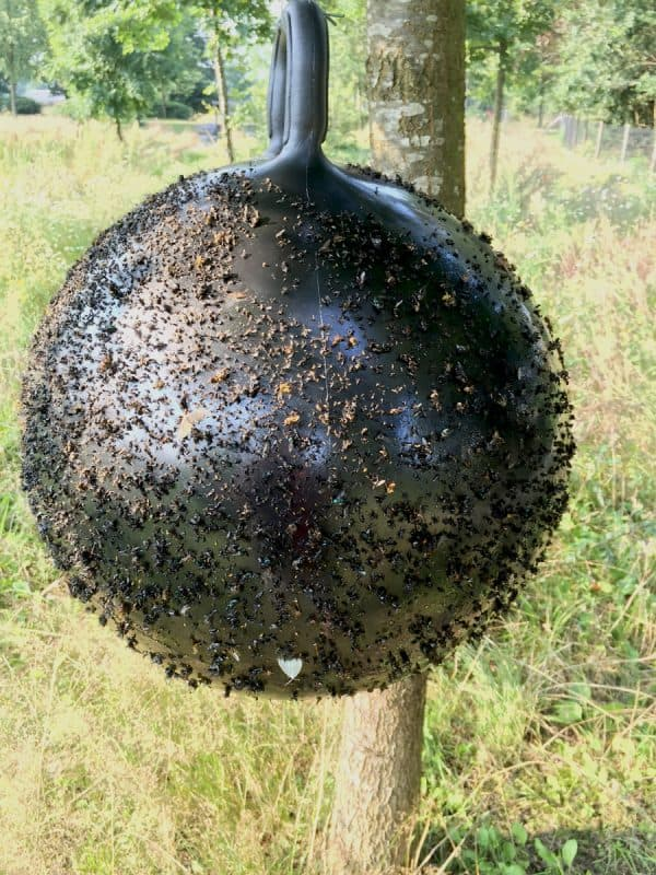 Horse Fly Trap Ball 45 cm 1
