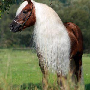Hi Gloss Spray voor Paarden 500 ml 4