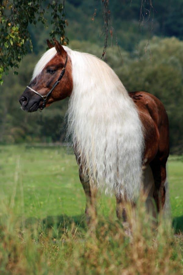 Hi Gloss Spray voor Paarden 500 ml 1
