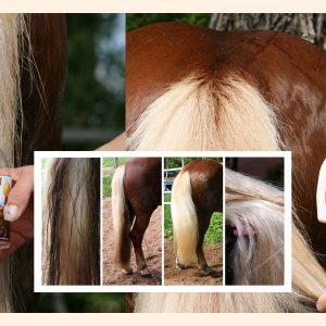 Hi Gloss Spray voor Paarden 500 ml 5