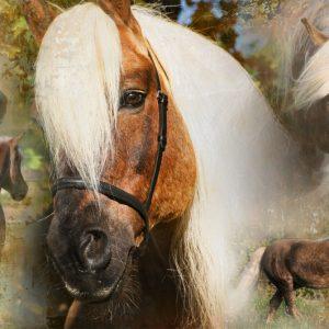 Hi Gloss Spray voor Paarden 500 ml 6