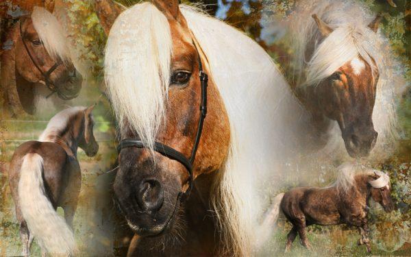 Hi Gloss Spray voor Paarden 500 ml 3