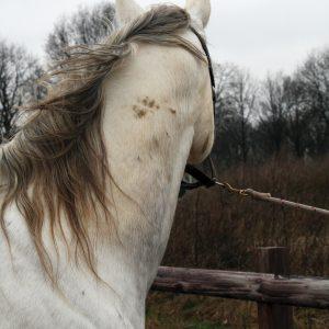 Hi Gloss Clean Spray voor Paarden 500 ml 7