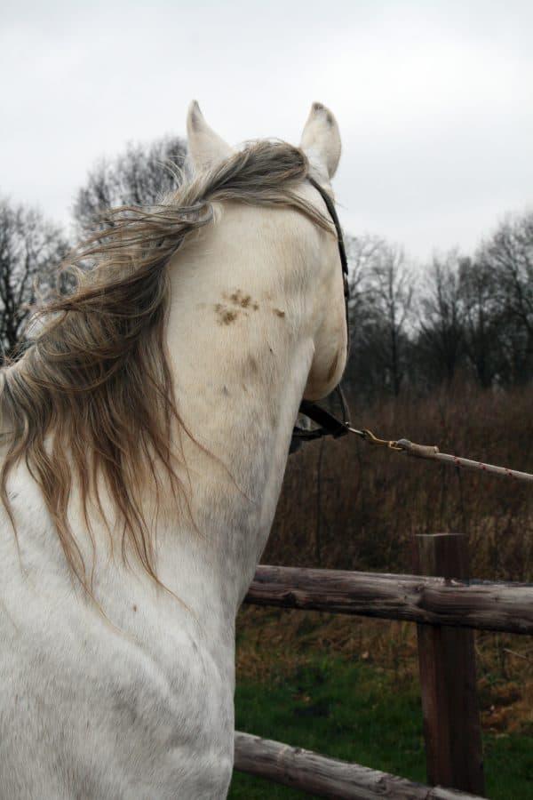 Hi Gloss Clean Spray voor Paarden 500 ml 3