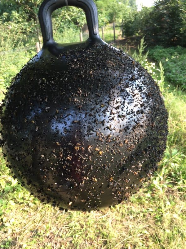 Horse Fly Trap Ball 45 cm 2