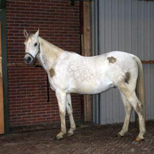 Hi Gloss Clean Spray voor Paarden 500 ml 8