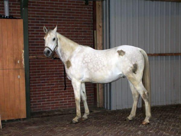 Hi Gloss Clean Spray voor Paarden 500 ml 4
