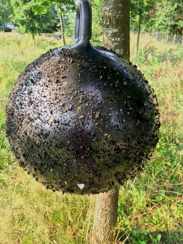 Horse Fly Trap Ball 45 cm 5